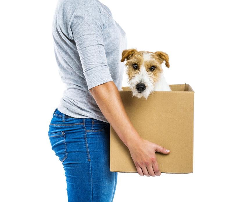 Moving-house-for-Pets